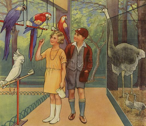 Children talking to parrots in the zoo