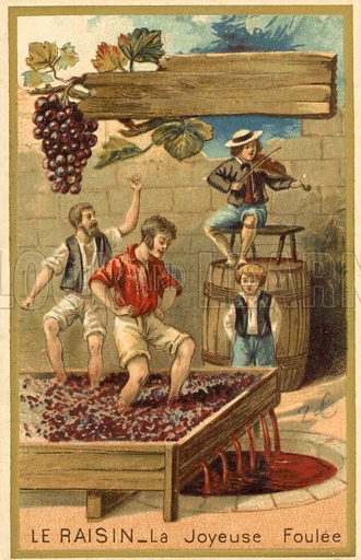 Treading grapes, picture, image, illustration