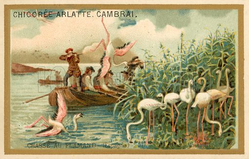 Hunting flamingos, Spain. French educational card, late 19th or early 20th century.