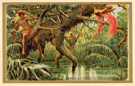 Hunting birds of paradise, Malaysia. French educational card, late 19th or early 20th century.