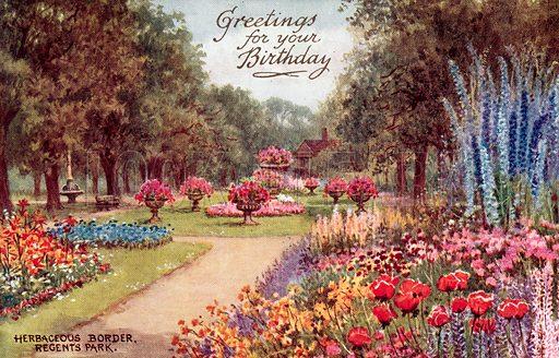 Herbaceous Border, Regents Park