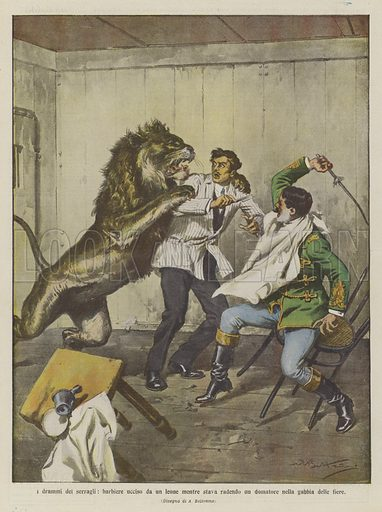 I drammi dei serragli, barbiere ucciso da un leone mentre stava radendo un domatore nella gabbia delle fiere. Illustration for La Domenica Del Corriere, 5-12 March 1911.