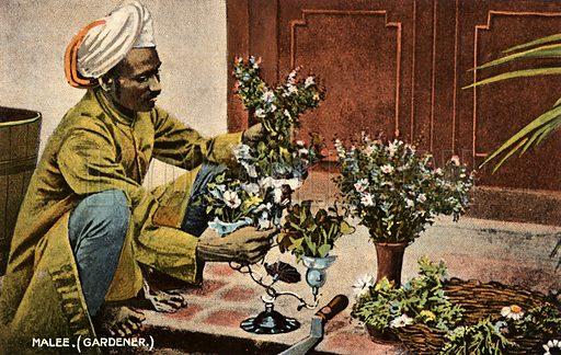 Malee, gardener, India