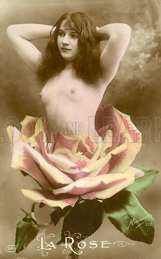 La Rose, naked girl emerging from a rose