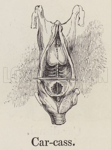 Carcass. Illustration for An Illustrated Vocabulary For The Use Of The Deaf And Dumb (SPCK, 1857).