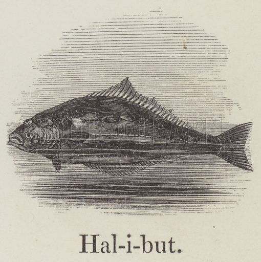 Halibut. Illustration for An Illustrated Vocabulary For The Use Of The Deaf And Dumb (SPCK, 1857).