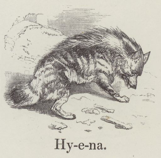 Hyena. Illustration for An Illustrated Vocabulary For The Use Of The Deaf And Dumb (SPCK, 1857).