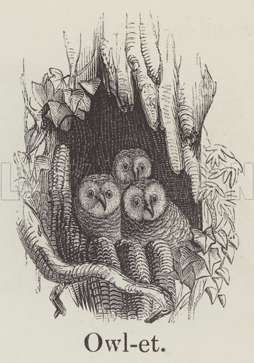 Owlet. Illustration for An Illustrated Vocabulary For The Use Of The Deaf And Dumb (SPCK, 1857).