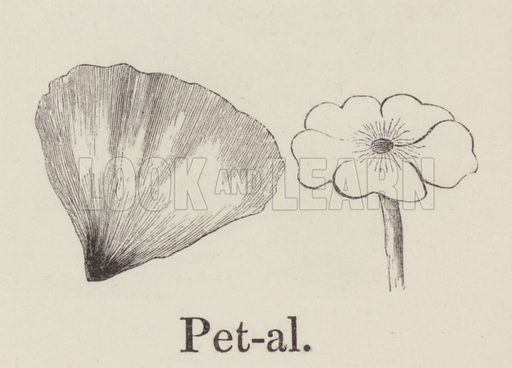 Petal. Illustration for An Illustrated Vocabulary For The Use Of The Deaf And Dumb (SPCK, 1857).