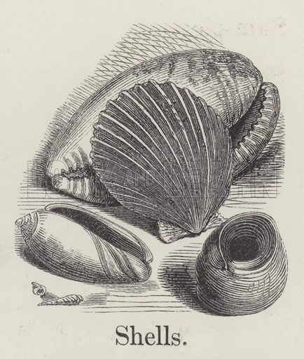 Shells. Illustration for An Illustrated Vocabulary For The Use Of The Deaf And Dumb (SPCK, 1857).