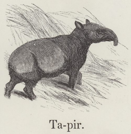 Tapir. Illustration for An Illustrated Vocabulary For The Use Of The Deaf And Dumb (SPCK, 1857).