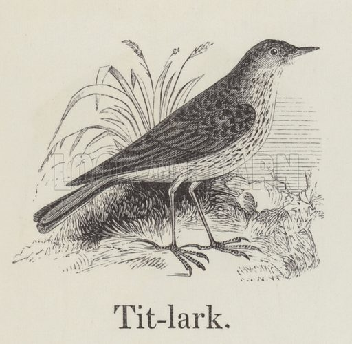 Titlark. Illustration for An Illustrated Vocabulary For The Use Of The Deaf And Dumb (SPCK, 1857).