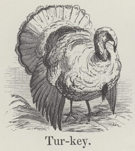 Turkey. Illustration for An Illustrated Vocabulary For The Use Of The Deaf And Dumb (SPCK, 1857).