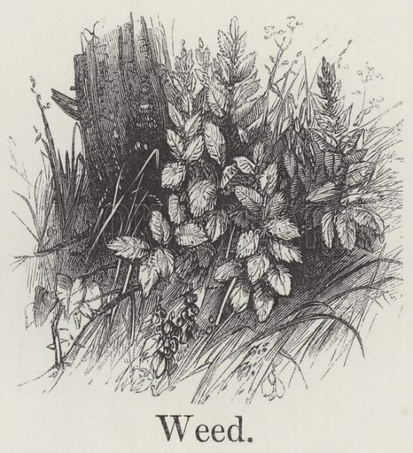 Weed. Illustration for An Illustrated Vocabulary For The Use Of The Deaf And Dumb (SPCK, 1857).
