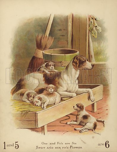 Spot and Her Five Puppies