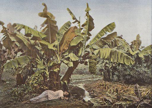 Bananier Et Manioc. Illustration for Autour Du Monde (L Boulanger, c 1900).