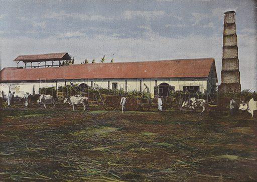 Recolte De La Canne A Sucre. Illustration for Autour Du Monde (L Boulanger, c 1900).