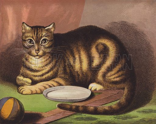 The Cat. Illustration for The Child's Picture Book of Domestic Animals (George Routledge, c 1880).