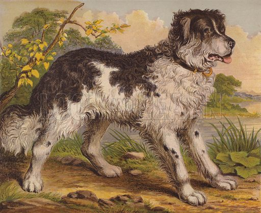 Big Dogs. Illustration for The Child's Picture Book of Domestic Animals (George Routledge, c 1880).
