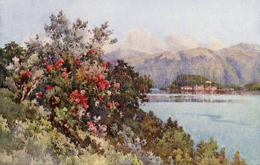 Roses, Villa Carlotta, Lago di Como. Illustration for The Italian Lake Described by Richard Bagot (A&C Black, 1905).