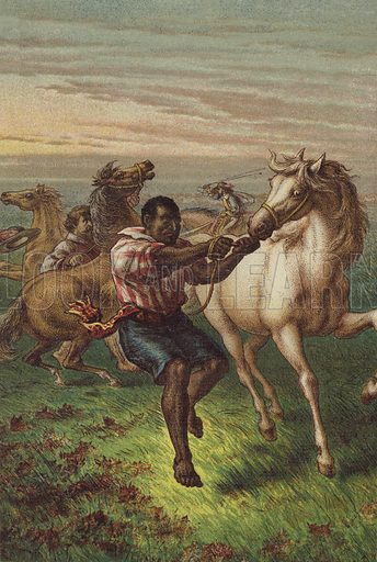 Garibaldi's troopers breaking wild horses. Illustration for The Life and Times of Garibaldi (Walter Scott, 1881).