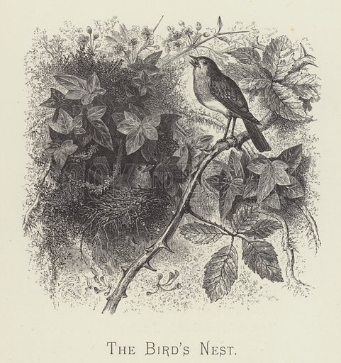 The bird's nest. Illustration for Moral Songs by Mrs CF Alexander (Masters & Co, 1880).