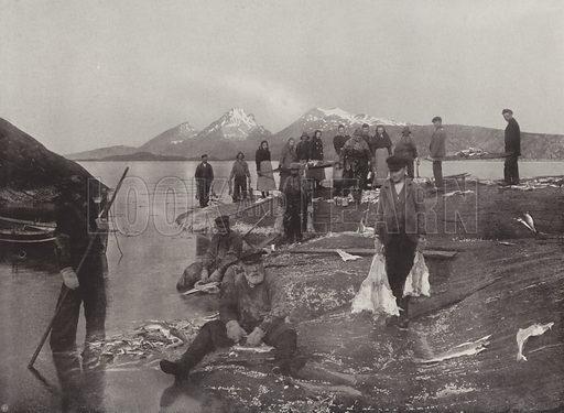 Washing Klip-fish. Illustration for Norge (Mittet & Co, c 1910).