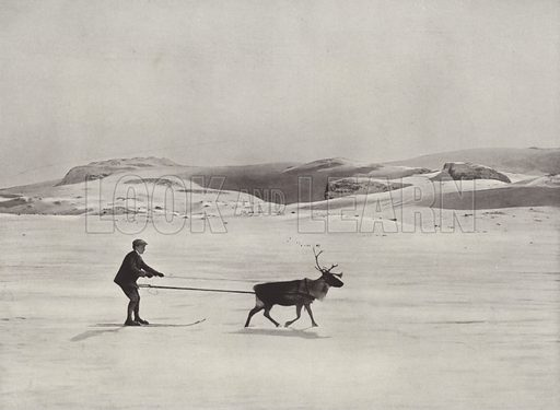 Ski-Driving with Reindeer on the Mountains. Illustration for Norge (Mittet & Co, c 1910).