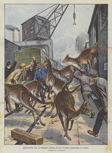 Emozionante Fuga Di Parecchi Canguri Da Una Stazione Ferroviaria Di Londra