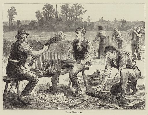 Flax Rippling. Illustration for Great Industries of Great Britain (Cassell, c 1885).