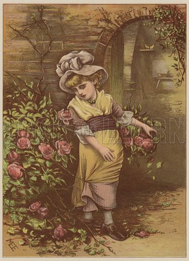 Girl picking roses. Illustration for Golden Hours by Mrs Sale Barker with illustrations from designs by M Ellen Edwards (George Routledge, 1885).