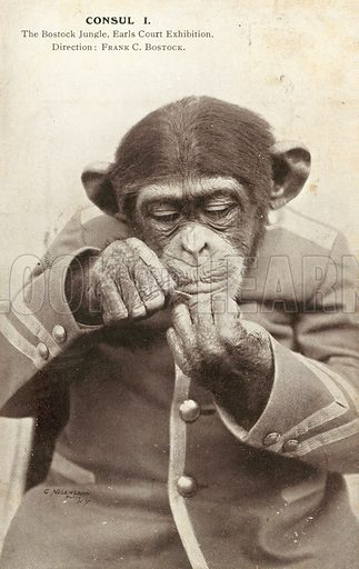 Chimp wearing a jacket