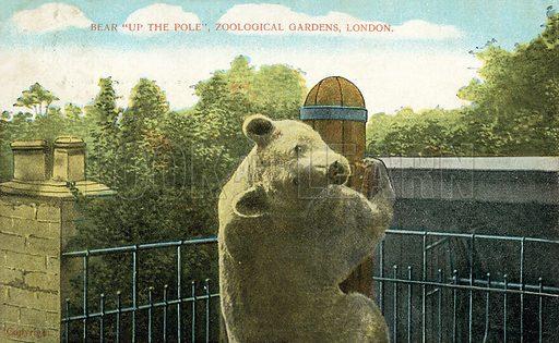 Bear climbing a pole, London Zoo.  Postcard, early 20th century.