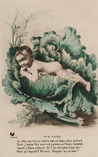 Baby in a cabbage