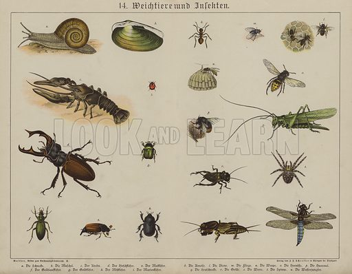 Animals. Illustration for Bilder zum Anschauungsunterricht fur die Jugend by Eduard Walther (Eklingen, 1891). Double-page lithographs of exceptional quality, capable of reproduction at large size.