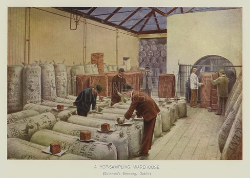 A hop sampling warehouse, Guinness Brewery, Dublin. Illustration for The Practical Grocer by WH Simmonds (Gresham, 1906).