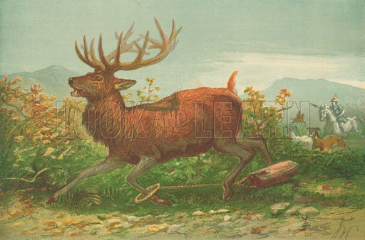 Stag hunting in the time of Xenophon