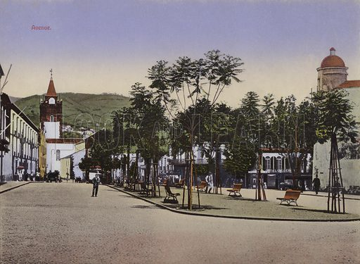 Avenue. Illustration for a souvenir booklet about Madeira, late 19th or early 20th century.