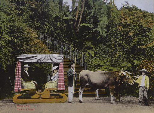Bullock car. Illustration for a souvenir booklet about Madeira, late 19th or early 20th century.