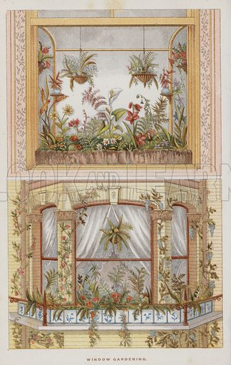 Window Gardening. Illustration for The Book of Garden Management, A Compendium to the Theory and Practice of Horticulture and a Complete Guide to Gardening (Ward Lock, c 1890).