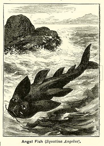 Angel fish. Illustration for The Boy's Own Annual, 1881.