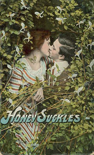 Honey Suckles