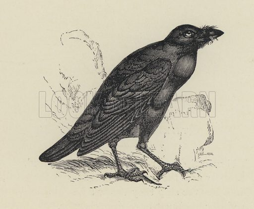 Edgar Allen Poe, The Raven. Illustration for Gems of Literature and Elegant Extracts (Nimmo, c 1870).