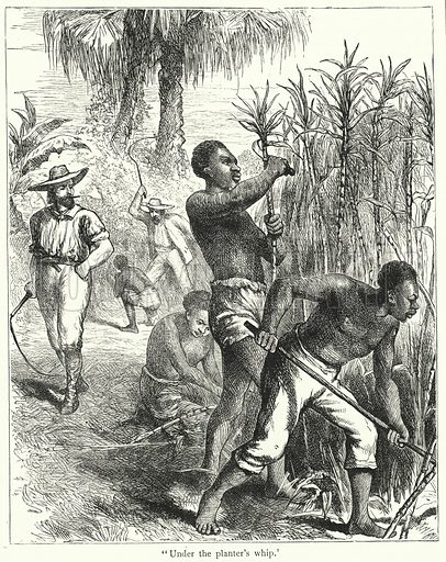Slavery, Under the Planter's Whip.  Illustration for Scattered Seed (Broom and Rouse, 1889).