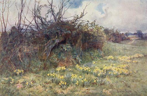 """When Daffodils Begin to Peer"""