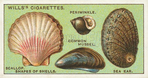 """Shapes of shells, scallop, periwinkle, common mussel, sea ear. Illustration for one of a series of cigarette cards on the subject of """"Do You Know"""" published by Wills's Cigarettes, early 20th century."""