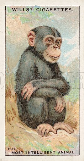 "The Most Intelligent Animal. Illustration for one of a series of cigarette cards on the subject of ""Do You Know"" published by Wills's Cigarettes, early 20th century."