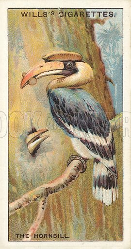 """The Hornbill. Illustration for one of a series of cigarette cards on the subject of """"Do You Know"""" published by Wills's Cigarettes, early 20th century."""
