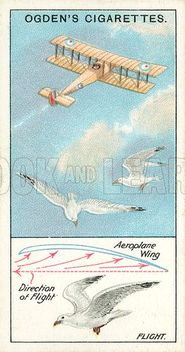 Flight. Illustration for one of a series of cigarette cards on the subject of Marvels of Motion, published by Ogden's Cigarettes, early 20th century.