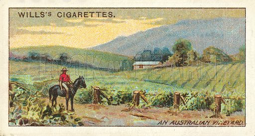 An Australian Vineyard. Illustration for one of a series of cigarette cards on the subject of Overseas Dominions, Australia published by Wills's Cigarettes, early 20th century.